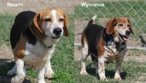 Sioux City Now & Noah's Hope Featured Pets - Wynonna and Naomi