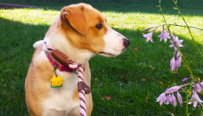 Sioux City Now - Noah's Hope Animal Rescue Pet of the Week - Lila