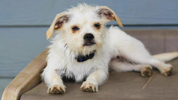 Sioux City Now - Pet of the Week - Phoebe