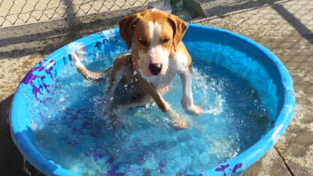 Sioux City Now - Noah's Hope Animal Rescue - Pet of the Week - Lizzy