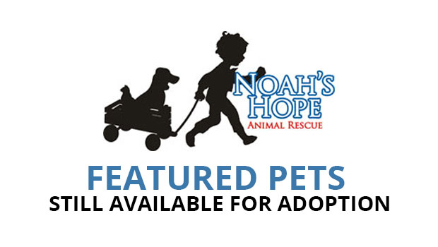 Sioux City Now and Noah's Hope Animal Rescue - Featured Pets