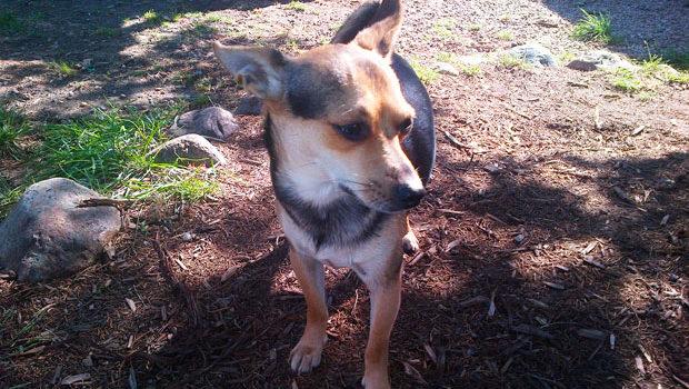 Sioux City Now - Noah's Hope Featured Pet - Nacho
